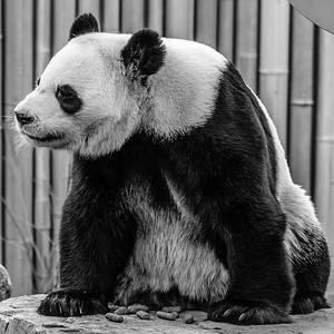2017-03-29_Zoo_01