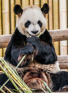 2017-03-29_Zoo_09