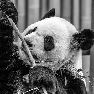 2017-03-29_Zoo_10