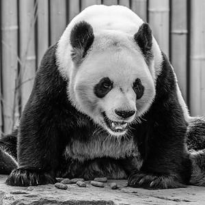 2017-03-29_Zoo_03
