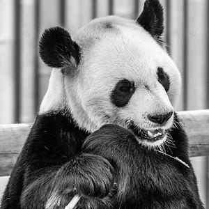 2017-03-29_Zoo_08