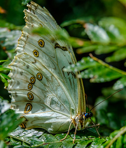 2017-04-27_Niagara_Butterflies_08
