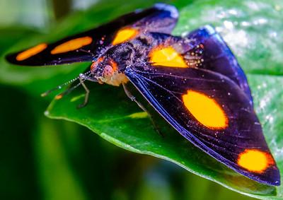 2017-04-27_Niagara_Butterflies_09