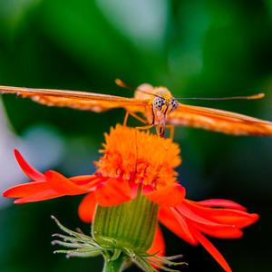 2017-04-27_Niagara_Butterflies_17