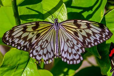 2017-04-27_Niagara_Butterflies_14