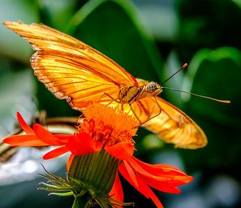 2017-04-27_Niagara_Butterflies_16