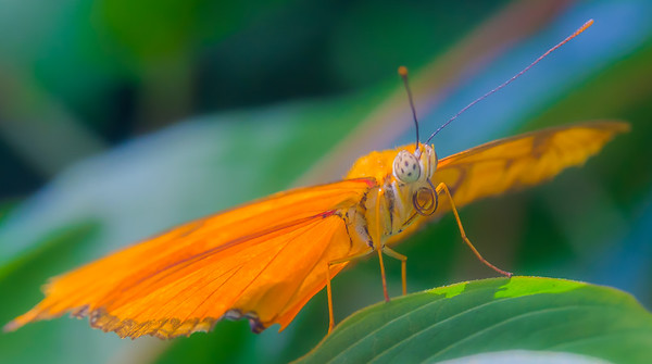 2017-04-27_Niagara_Butterflies_18