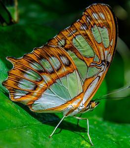 2017-04-27_Niagara_Butterflies_10