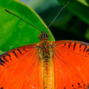2017-04-27_Niagara_Butterflies_07