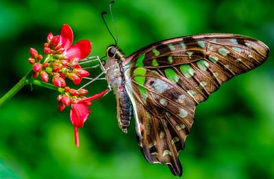 2017-04-27_Niagara_Butterflies_06