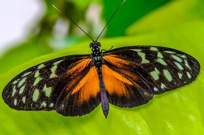 2017-04-27_Niagara_Butterflies_02