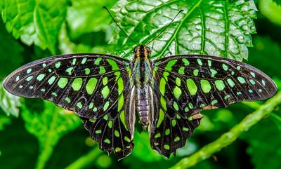 2017-04-27_Niagara_Butterflies_05