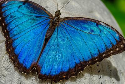 2017-04-27_Niagara_Butterflies_03