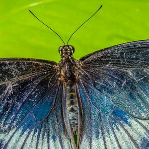 2017-04-27_Niagara_Butterflies_15