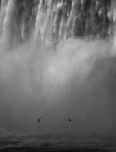 2017-04-30_Niagara_Birds_In_Falls_04