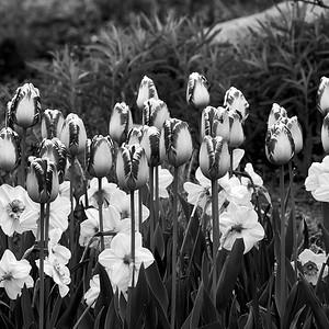 2017-05-11_Edward_Gardens_18