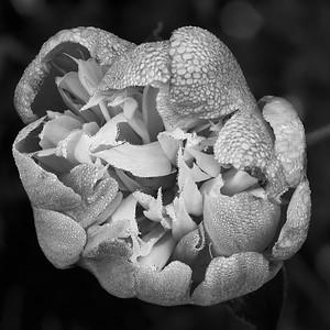 2017-06-22_Edward_Gardens_04