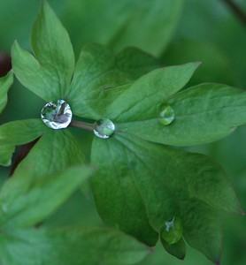 Drops of Water - 03