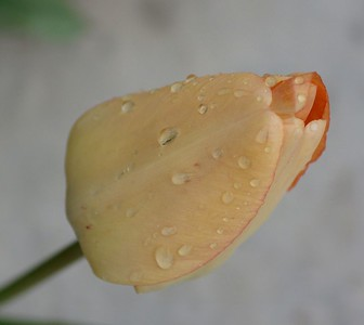 Drops of Water - 07