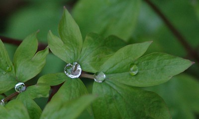 Drops of Water - 04