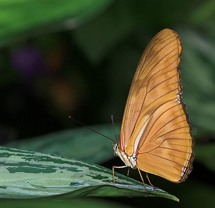May Butterfly Conservatory - 05