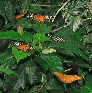 May Butterfly Conservatory - 04