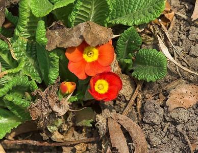 Edward Gardens - April - 20