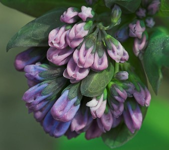 Edward Gardens - April - 12