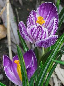Edward Gardens - April - 13