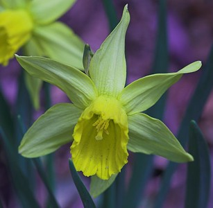 Edward Gardens - April - 11