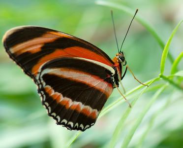 Butterfly Conservatory 9 July - 07