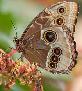 Butterfly Conservatory 9 July - 09