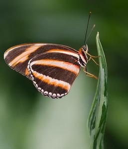 Butterfly Conservatory 9 July - 05