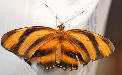 Butterfly Conservatory 9 July - 11