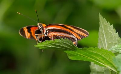 Butterfly Conservatory 9 July - 02