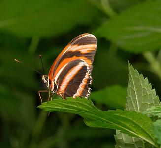 Butterfly Conservatory 9 July - 01
