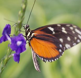 Butterfly Conservatory 9 July - 06