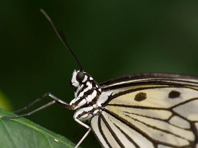 Butterfly Conservatory 9 July - 12