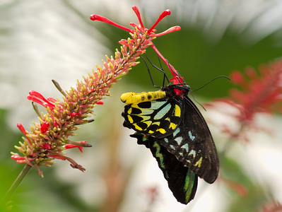 Butterfly Conservatory 9 July - 10