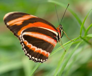 Butterfly Conservatory 9 July - 08