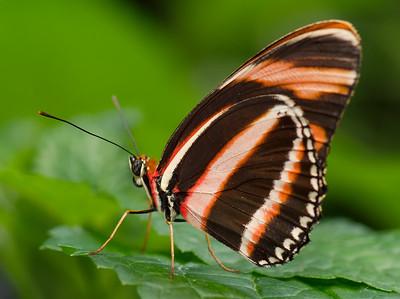 Butterfly Conservatory 9 July - 03