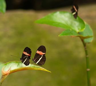 Butterfly Conservatory April - 15
