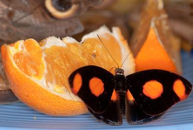 Butterfly Conservatory April - 20