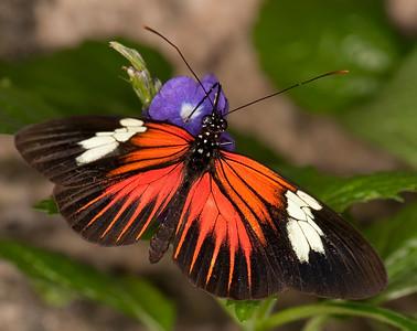 Butterfly Conservatory April - 02