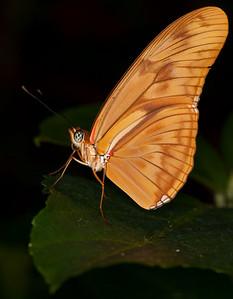 Butterfly Conservatory April - 12