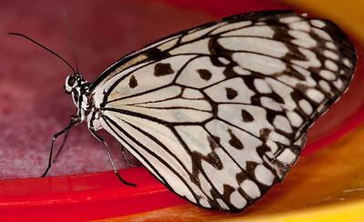 Butterfly Conservatory April - 13