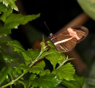 Butterfly Conservatory April - 18