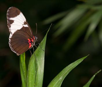 Butterfly Conservatory April - 23