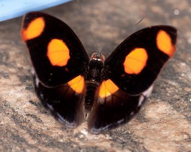 Butterfly Conservatory April - 19