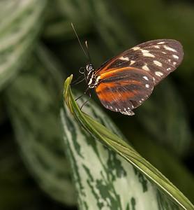 Butterfly Conservatory April - 17